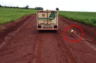 有洋葱!主人尸体被运走 忠狗不舍苦追16公里