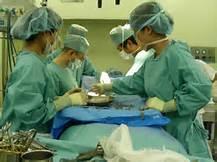 用猪眼角膜移植 将进入人体临床实验